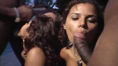 Astonishing babes Nivia and Oninha share their desire for black dick
